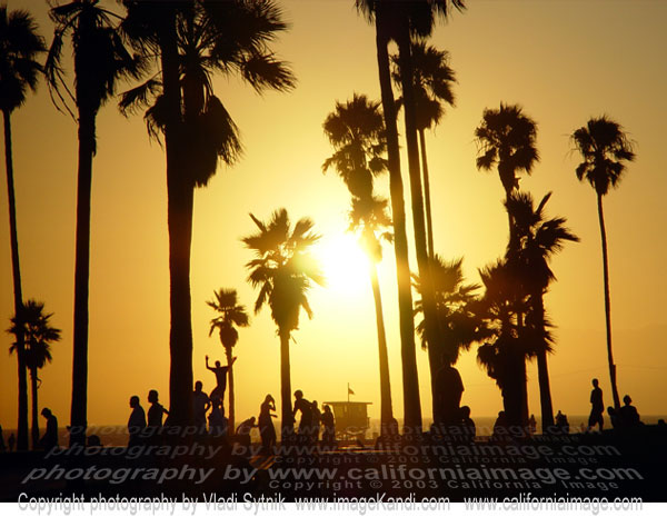 venice beach skaters sunset california photo beach venice 600x465